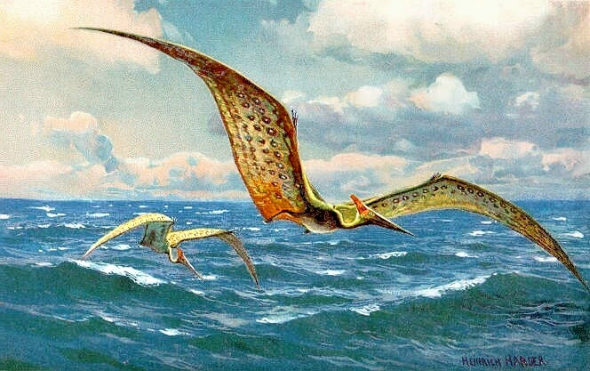 Pteranodon_hharder