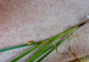 Thin little fronds on the countertop